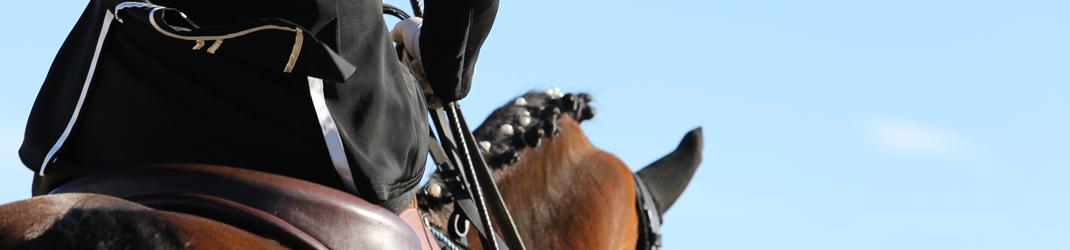 Marie Caroline Brisoux photo de cheval et poney